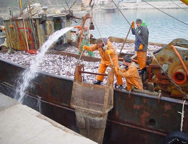 рыболовная компания фор в калининграде